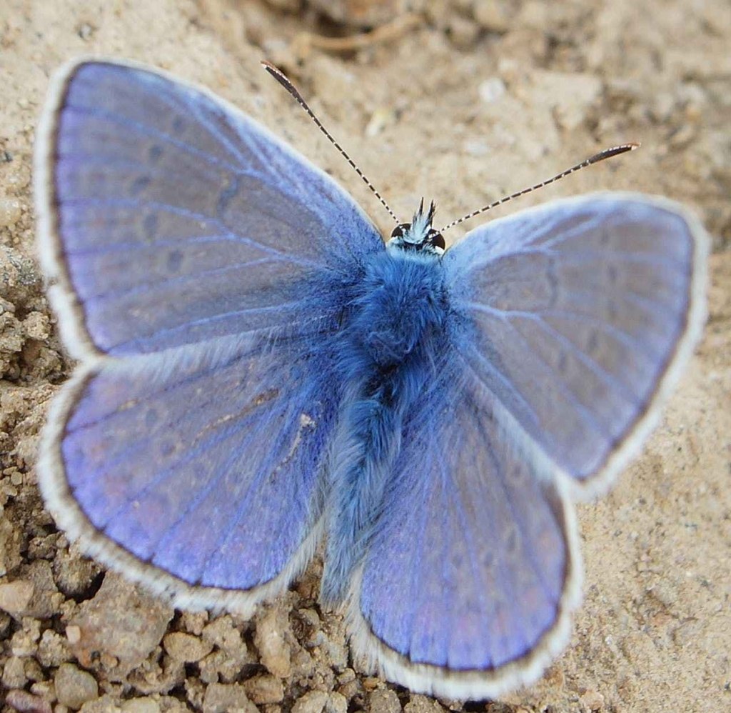 This image has an empty alt attribute; its file name is butterflyicon-e1547310680555.jpg